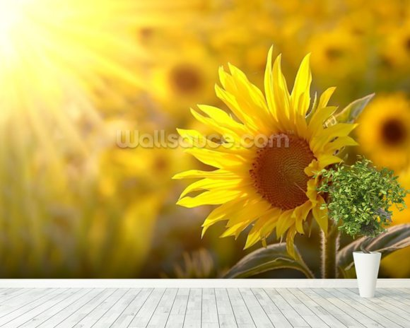 Sunflower Meadow mural wallpaper room setting