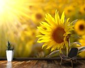 Sunflower Meadow mural wallpaper kitchen preview