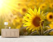 Sunflower Meadow mural wallpaper living room preview