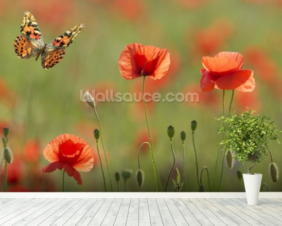 Poppies and Butterflies wall mural room setting