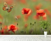 Poppies and Butterflies wall mural in-room view
