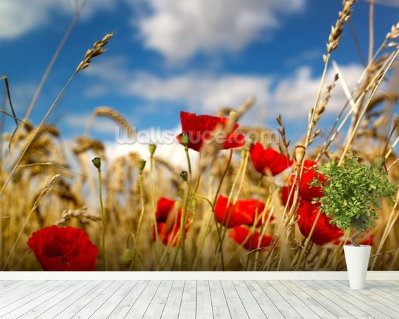 Wild Poppies in Wheat Field wall mural room setting