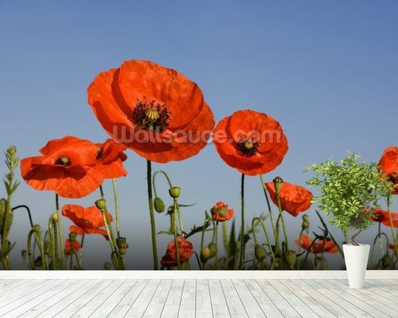 Poppy wallpaper mural room setting