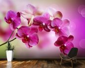 Orchid wall mural kitchen preview