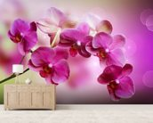 Orchid wall mural living room preview