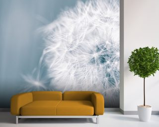 Dandelion Clock Wall Mural Wallpaper