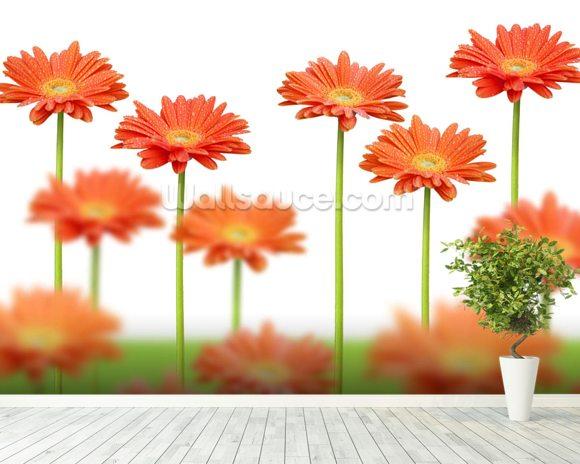Orange Daisies Wallpaper Mural Room Setting