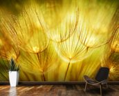 Soft Dandelion Flowers mural wallpaper kitchen preview