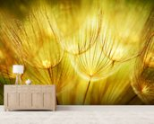 Soft Dandelion Flowers mural wallpaper living room preview