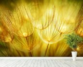 Soft Dandelion Flowers mural wallpaper in-room view