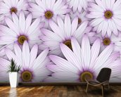 Field of Purple Daisies wall mural kitchen preview