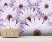 Field of Purple Daisies wall mural living room preview