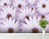 Field of Purple Daisies wall mural in-room view