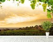 Vineyard wallpaper mural in-room view