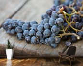 Wine Grapes mural wallpaper kitchen preview