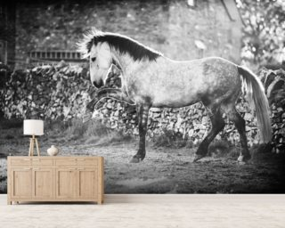 Prancer wall mural