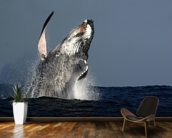 Humpback Whale Breaching wallpaper mural kitchen preview