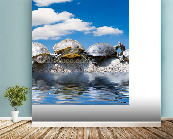 Turtle Meeting wallpaper mural room setting