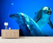 Curious Dolphins mural wallpaper living room preview
