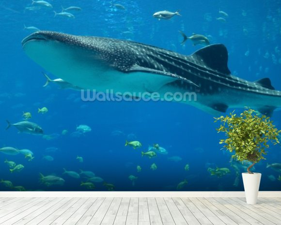 Whale Shark and Fish wall mural room setting