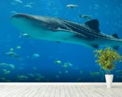 Whale Shark and Fish wall mural in-room view