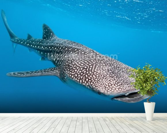 Whale Shark Way mural wallpaper room setting