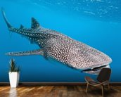 Whale Shark Way mural wallpaper kitchen preview