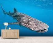 Whale Shark Way mural wallpaper living room preview