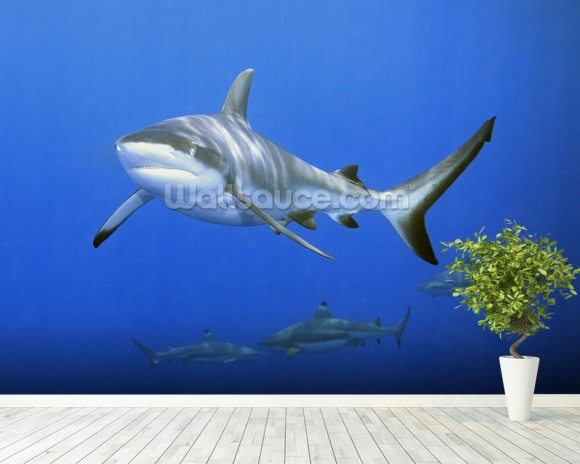 Shark School wall mural room setting