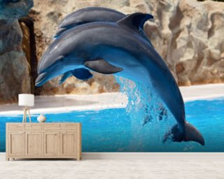 Dolphins wall mural