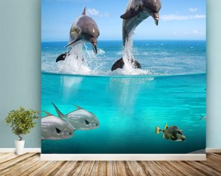 Dolphins Playground Wallpaper Wall Murals