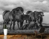 Happy Horse Family mural wallpaper kitchen preview
