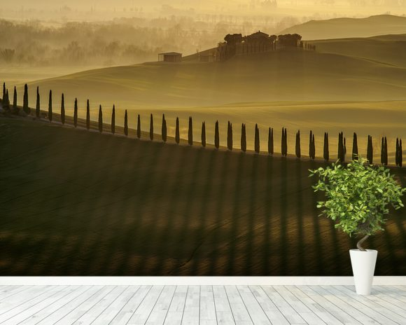 Cypress Shadows wall mural room setting