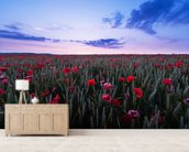 Red Poppies wall mural living room preview
