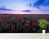 Red Poppies wall mural in-room view