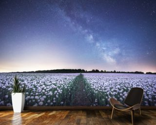 Poppies under the Night Sky wallpaper mural