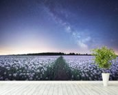 Poppies under the Night Sky wallpaper mural in-room view