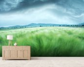 Barley Field mural wallpaper living room preview
