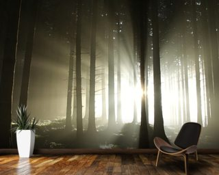 Light And Dark Forest Wall Mural Part 39