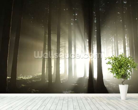 Light and dark forest wallpaper wall mural wallsauce usa for Mural lighting