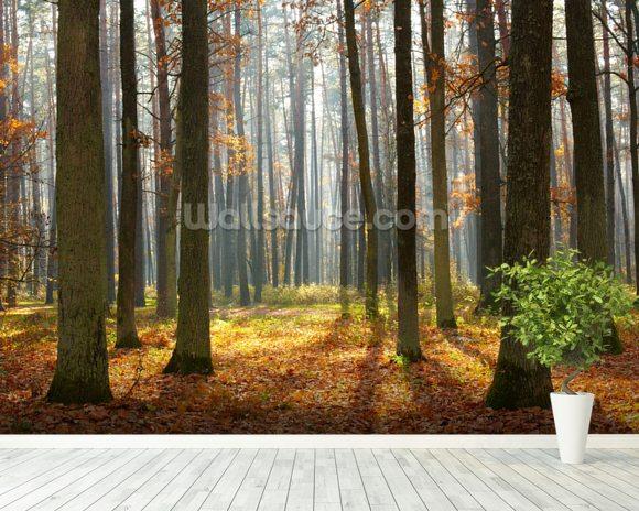 Autumn forest wallpaper wall mural wallsauce for Autumn forest wallpaper mural
