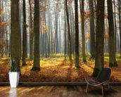 Autumn Forest wall mural kitchen preview