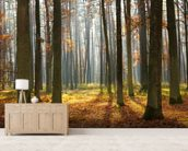 Autumn Forest wall mural living room preview