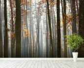 Autumn Forest wall mural in-room view