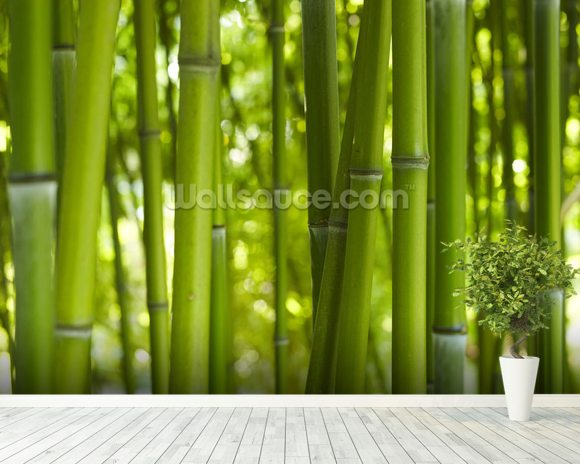 Bamboo Trees wall mural room setting