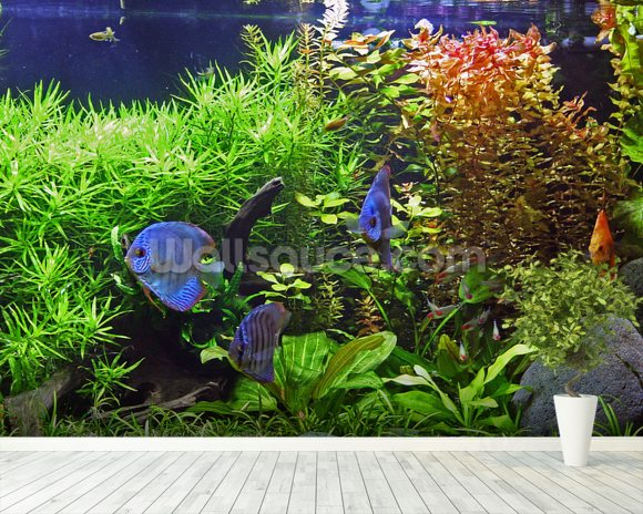 Aquarium with discus fish wallpaper wall mural wallsauce for Aquarium mural