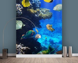 Coral Colony Wallpaper Mural Wall Murals Wallpaper