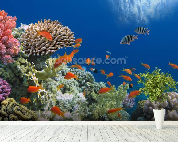 Tropical Fish on Coral Reef wall mural room setting