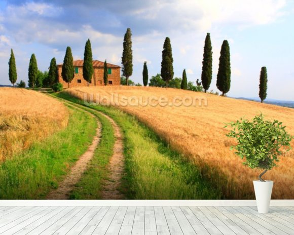Tuscany Cypress Trees wallpaper mural room setting