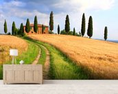 Tuscany Cypress Trees wallpaper mural living room preview